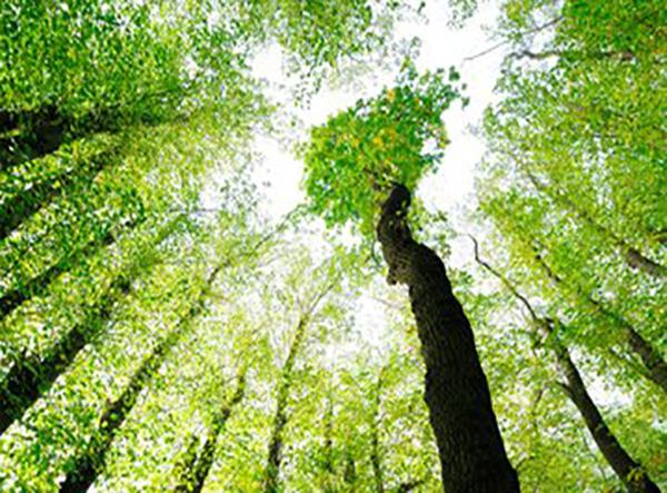 环境保护部环境监测司司长就《环境空气自动监测臭氧标准传递工作实施方案(